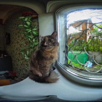 Кошка на окне кухни